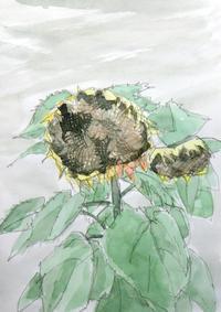 逆光の向日葵 - ryuuの手習い