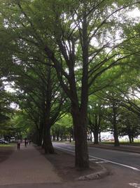 札幌 その3「北大キャンパスを歩く」 - まいにちノート(2冊目)