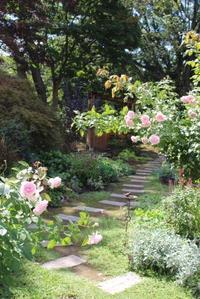 アナベルをマルガリ&奇跡のトンボ - ペコリの庭 *
