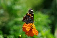 蝶3種 - 生きる。撮る。