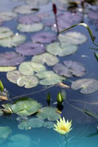 本日の空中庭園@池袋モネの水連 - meの写真はザンス