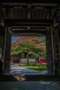 青岸寺の百日紅 - 鏡花水月