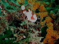 涼しくもアツい海でした♫ - 海洋速報  ~川奈日和~