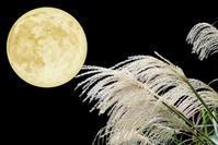 """満月と2019年11月のイベント(帝国ホテル大阪)の予告です。^^ - スピリチュアルカウンセリング &  ヒーリング 《""""こころ""""が輝くまで》"""