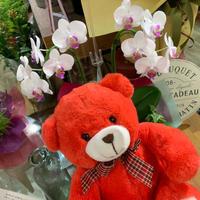 来週月曜は敬老の日(^-^) - ブレスガーデン Breath Garden 大阪・泉南のお花屋さんです。バルーンもはじめました。