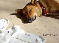 ユニクロの靴下にロゴ風アイロンシート - 光の種の育て方