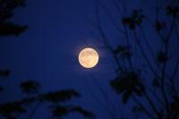 【中秋の名月】要するに・・月を理由に宴会!? ~星のソムリエの独り言 - SAMのLIFEキャンプブログ Doors , In & Out !