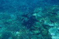 11日ぶり~糸満近海シュノーケリング~ - 沖縄本島最南端・糸満の水中世界をご案内!「海の遊び処 なかゆくい」