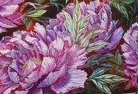 牡丹④ - 絵と庭