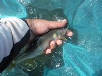 2019年9月8日鮎釣り友釣り大分県日田市三隈川ウロウロ - 川と海と友