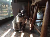 猫たらし疑惑 - りきの毎日