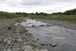 相模川の水生昆虫 - 海を歩くゲンゴロウ