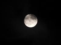 十五夜(中秋の名月) - なんでもブログ