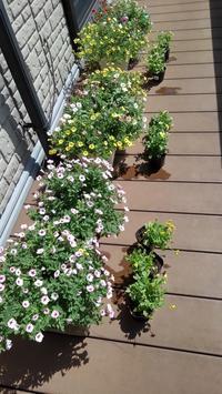 冬のプランター - うちの庭の備忘録 green's garden