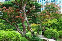 百日紅 - お散歩写真     O-edo line