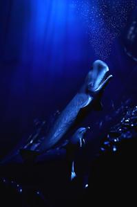クジラとイルカ -   木村 弘好の「こんな感じかな~」□□□ □□□□ □□ □ブログ□□□