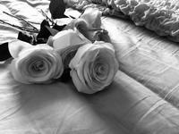 気持ちのいい朝 - RoseBijou-parler゚・*:.。.