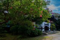 養源院の百日紅 - 鏡花水月