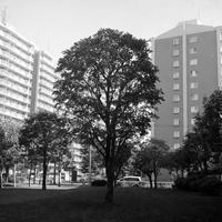 大木と蔵とベビーバギーのおだやかな日常 - 照片画廊