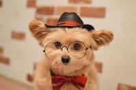 帽子とネクタイとメガネ - カンパーニュママの暮らしの雑貨とポメプーころすけと日々の出来事日記