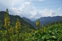苗場山で出会った風景-6 - 自然と仲良くなれたらいいな2