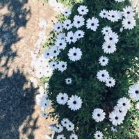 春は良い - tsuruhashi