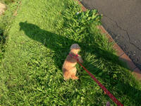 メリちゃんとお散歩 - 花と天然石ハンドメイドジュエリー