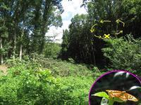 メスグロヒョウモンの占有行動 - 秩父の蝶