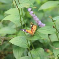 庭の蝶 - TACOSの野鳥日記