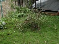 台風で大荒れの庭始末 - Baking Daily@TM5