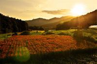 赤米2019 - 農と自然のさんぽみち・やまだ農園日記