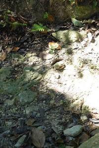 木漏れ日差し込む林の中で - YAJIS OFFICE BLOG