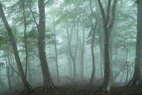 晴れ・気温16℃の朝・・・ブナの森朽木小川・気象台より - 朽木小川・気象台より、高島市・針畑・くつきの季節便りを!