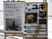 シロクマクロクマ - 動物園放浪記