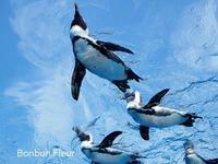 サンシャイン水族館 - Bonbon Fleur ~ Jours heureux  コサージュ&和装髪飾りボンボン・フルール