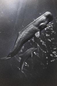 昔々のクジラとイルカ -   木村 弘好の「こんな感じかな~」□□□ □□□□ □□ □ブログ□□□