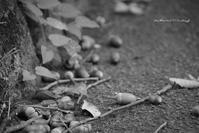 秋見つけ - Bamboobooのひとりごと