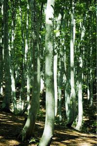 夏の終わり - 松之山の四季2
