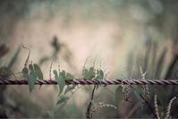 秋の支度 - ホンテ島 日記