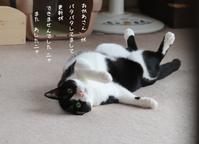 更新間に合わず(・・;) - gin~tetsu~nosuke