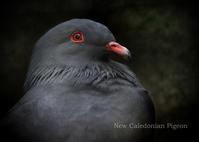 ミカドバト:Green Imperial-pigeon - 動物園の住人たち写真展(はなけもの写眞店)