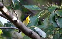 渡りの立ち寄りの鳥たち - 私の鳥撮り散歩