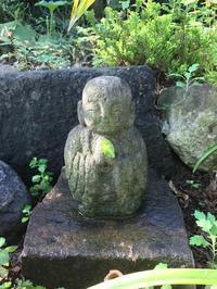 浮島館の庭から - 陰翳の煌き