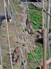 猿と金コアラ - yamatoのひとりごと
