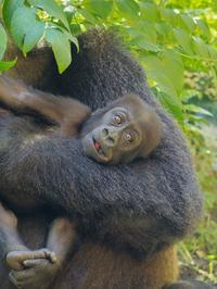 触ったりかじったり[京都市動物園] - a diary of primates