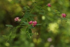 Garden Time このむのお庭に咲いていた花* - 静かな時間
