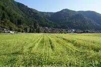 「森の京都は秋と夏の間(はざま)-美山町かやぶきの里-」 - ほぼ京都人の密やかな眺め Excite Blog版