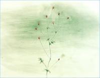 《野をゆけば・・・・「吾亦紅」》 - 『ヤマセミの谿から・・・ある谷の記憶と追想』