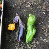 夏野菜最後 - ひとりごと
