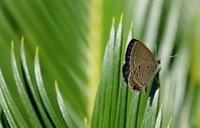 中秋その2 - 紀州里山の蝶たち